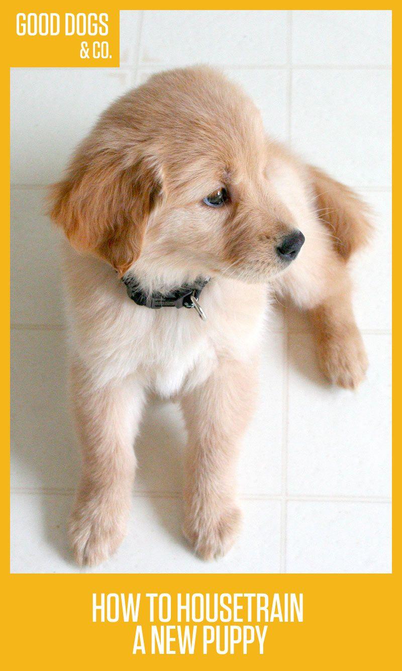 Training Dog For P
