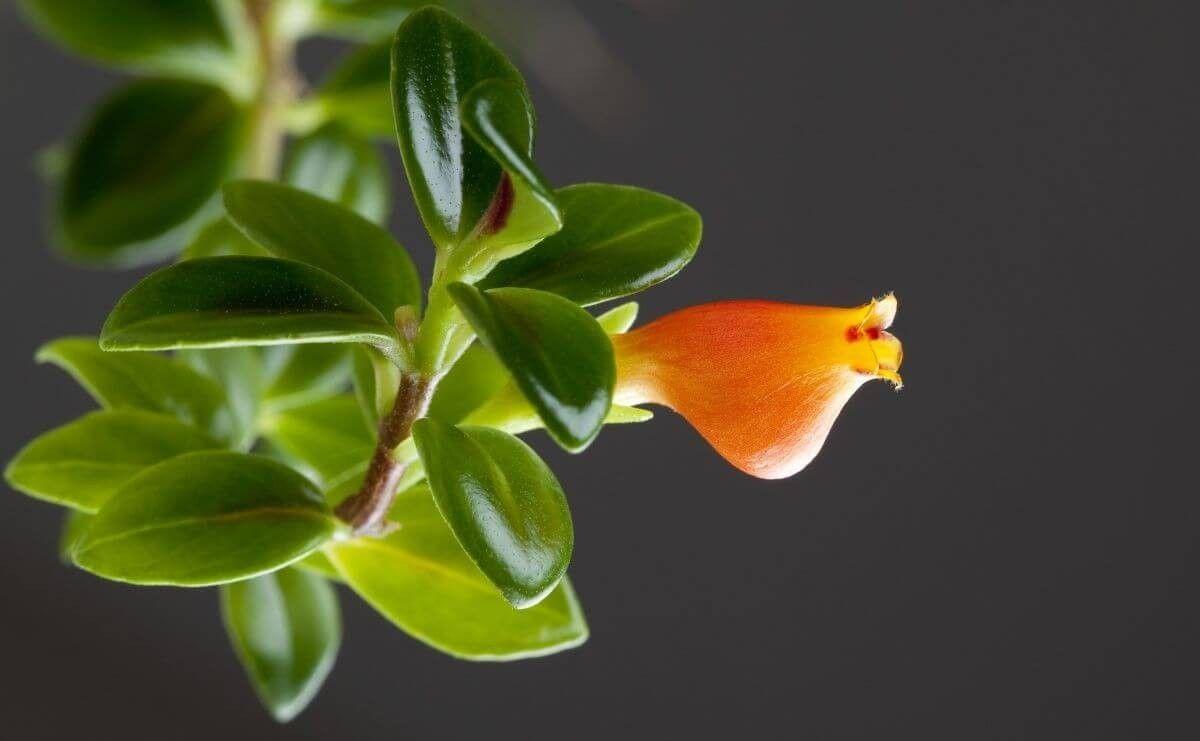 Самые дорогие комнатные цветы - названия с фото (с ...