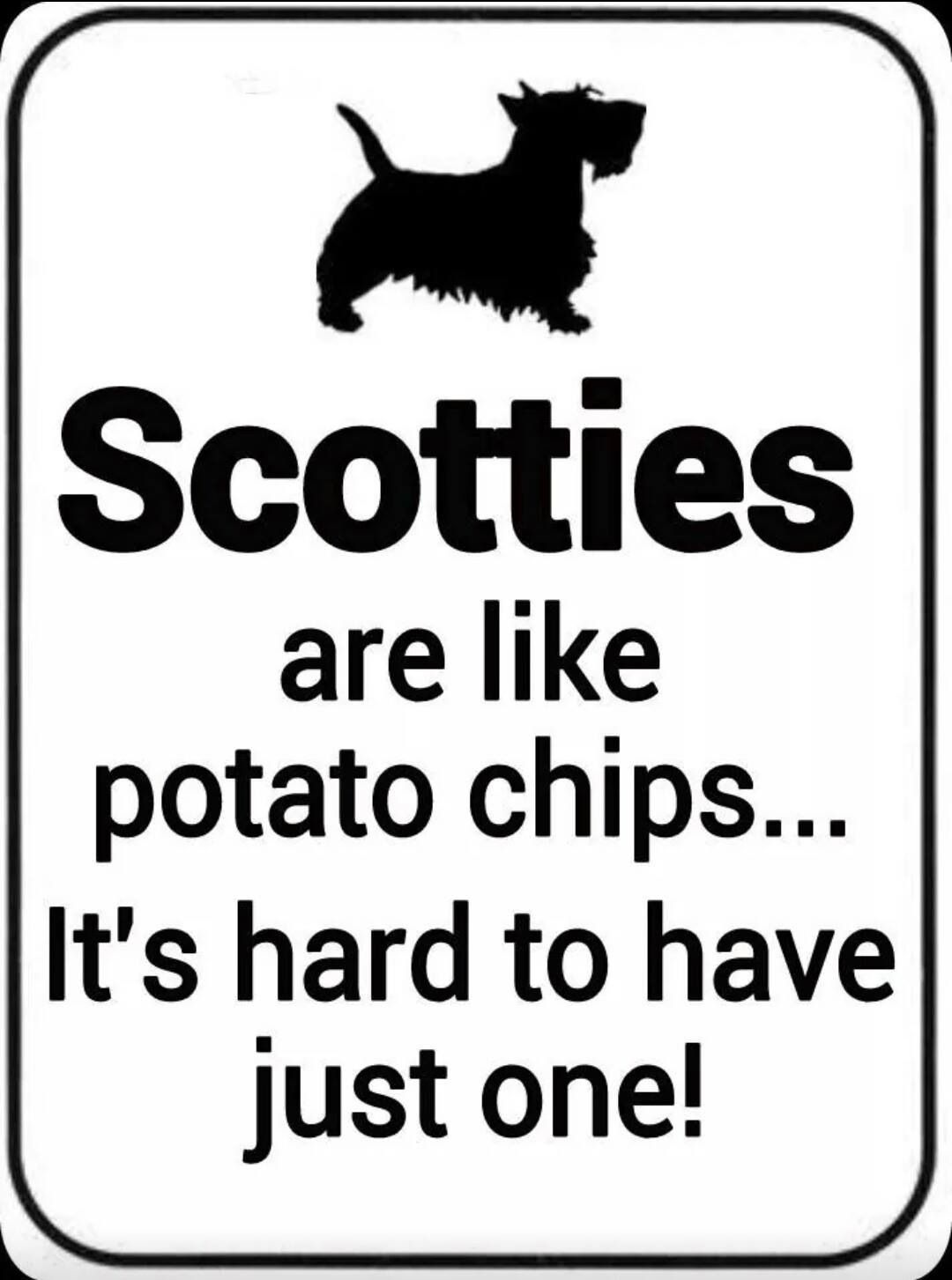 Pin By Scooter S Scotties On Scottie Dog Obsessions