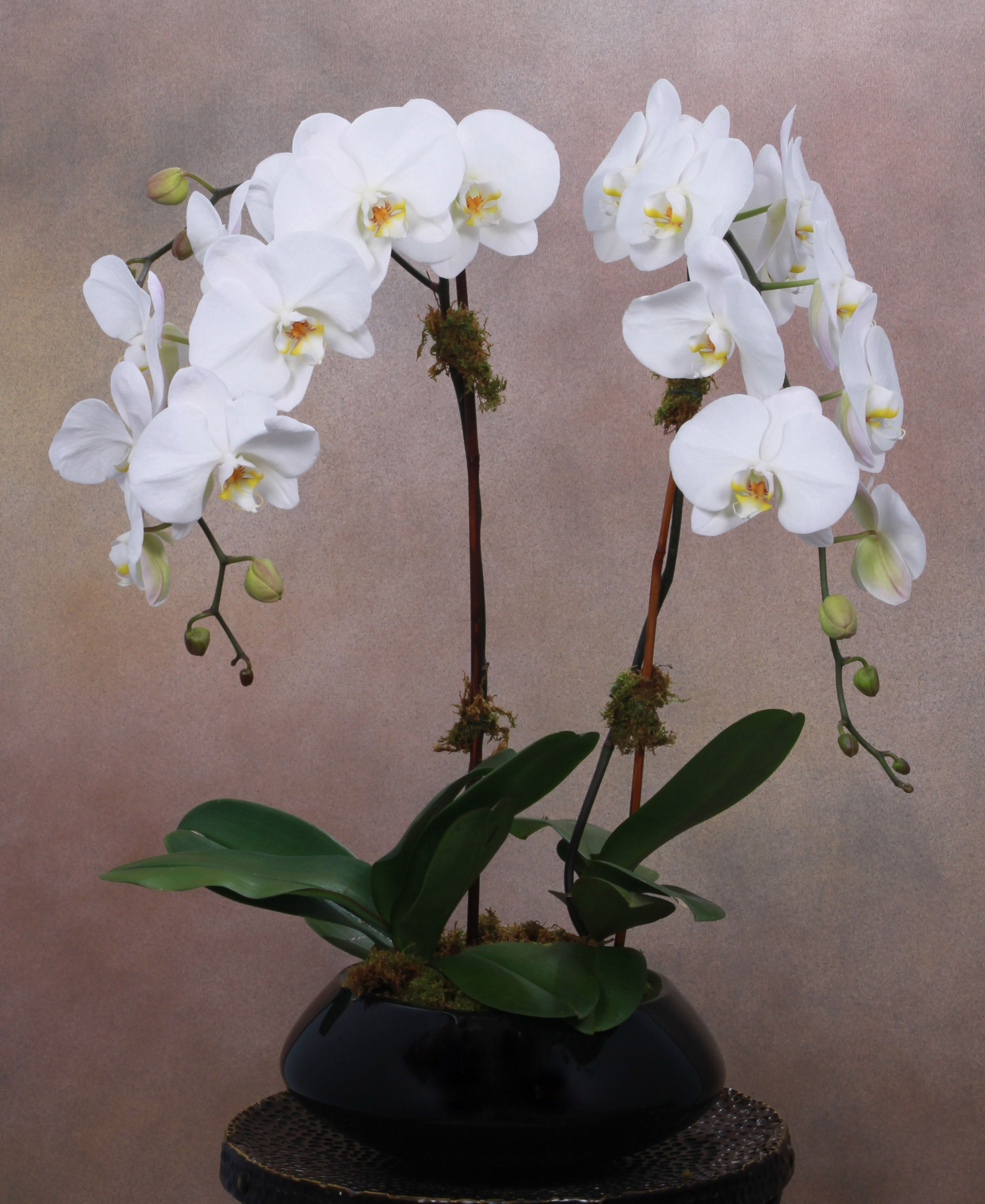 Your Favorite Manhattan Flower Shop Brings You The Double Cascading Orchid This Is A Pleasant Sight Where Orchids Same Day Flower Delivery Orchid Arrangements