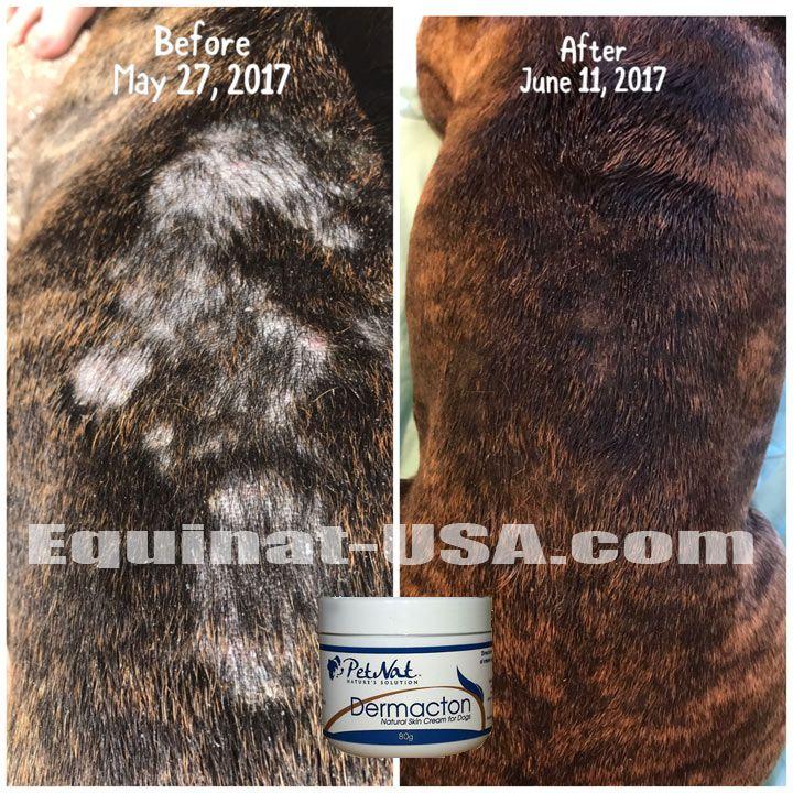 Black Skin Disease Dog Skin Problem Dog Hair Loss Skin Problems