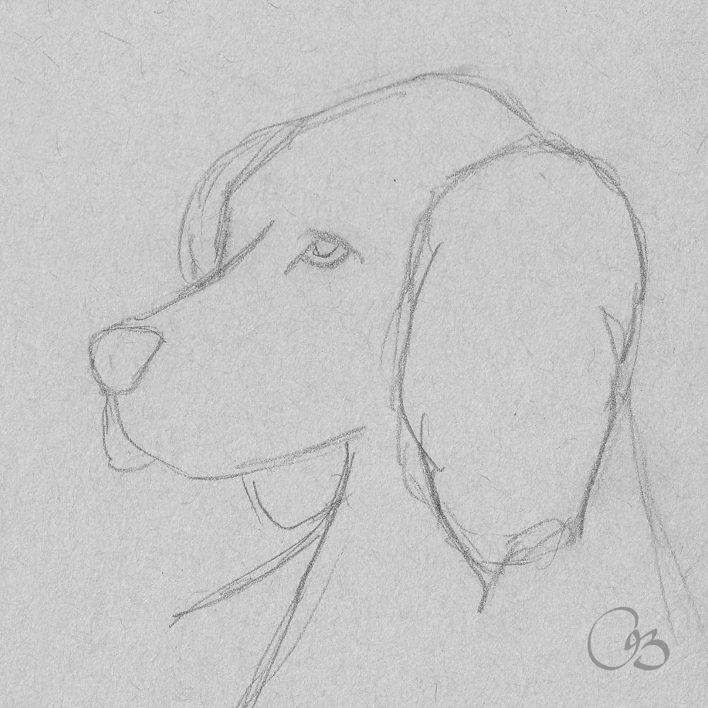 Dog Sketch Drawing Disney Drawings Sketches Disney Art Drawings Drawing Sketches
