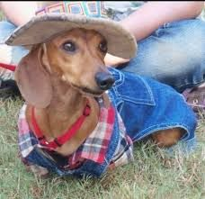 Dachshund Costume As A Cowboy Or Cowgirl You Could Diy Using