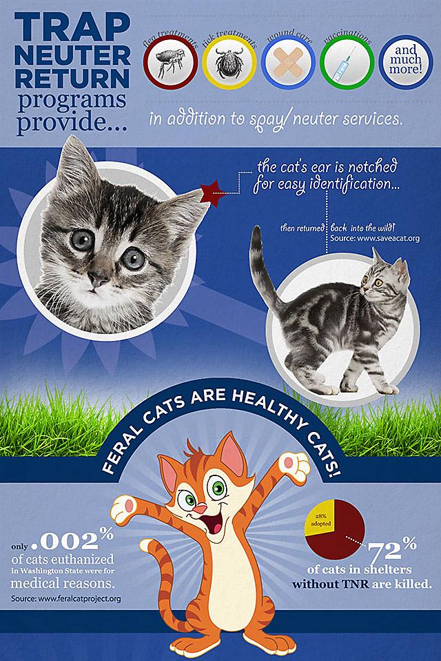 Benefits Of Trap Neuter Return Programs Part 2 Feral Cats Cats