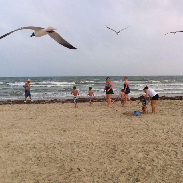 Mustang Island Beach: Beach Mustang Island, Port Aransas, TX