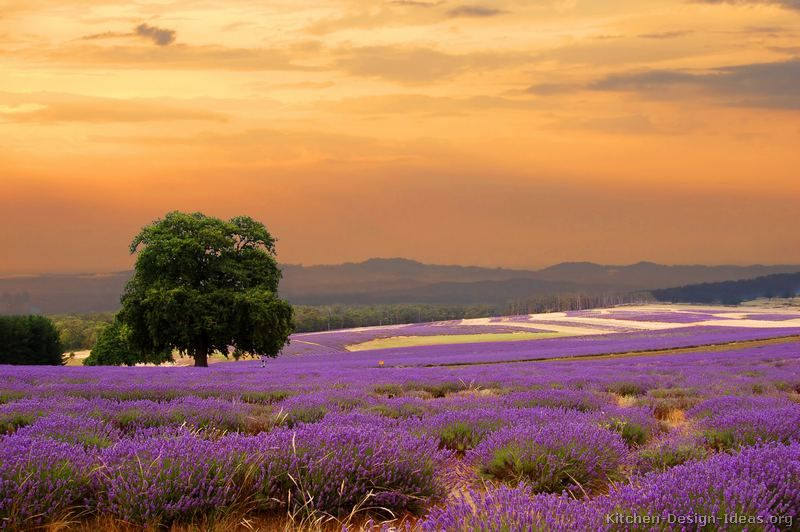 French Countryside Lavender Field In France At Sunset Lavande - French country side