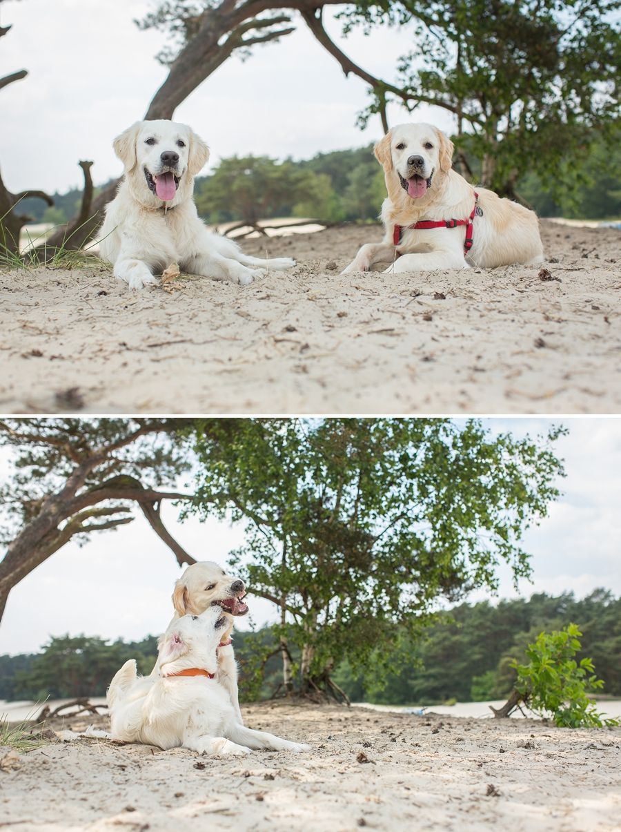 Huisdierenfotografie Perfect Portret
