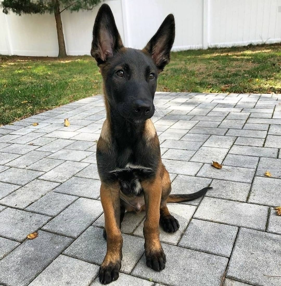 Tips To Getting Homeowners Insurance After Dog Bite Incident