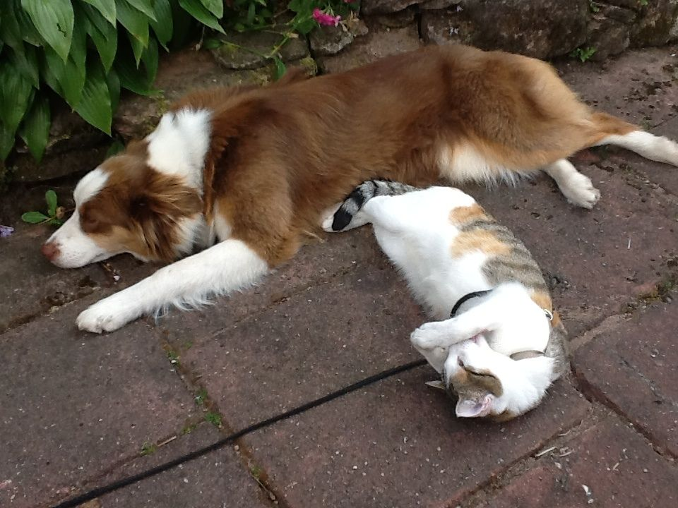 Hund und Katze bei relaxen im Garten