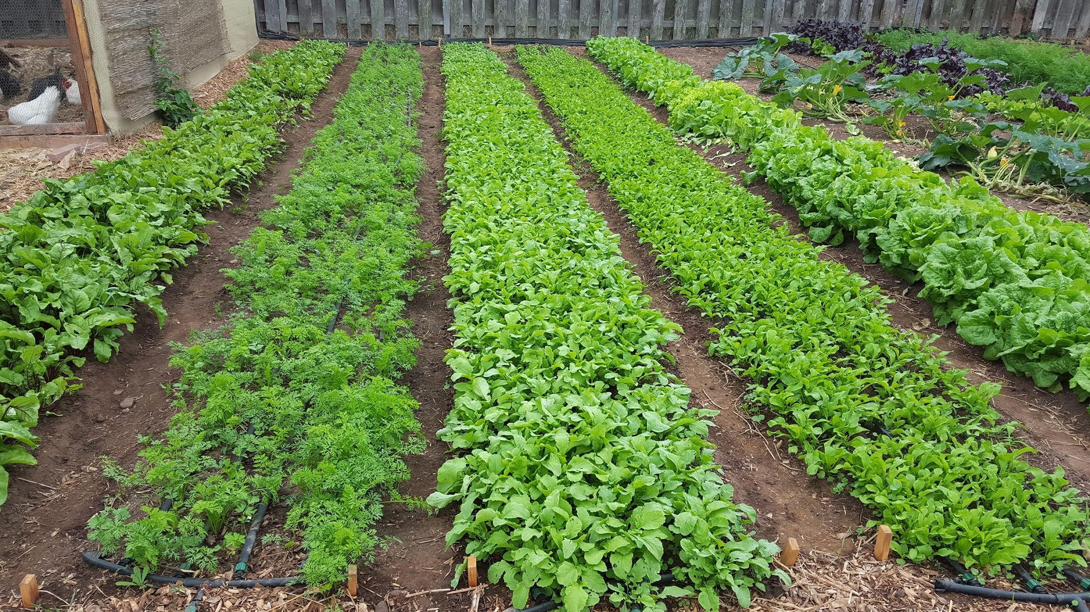 Learn about regenerative agriculture, market gardening ...