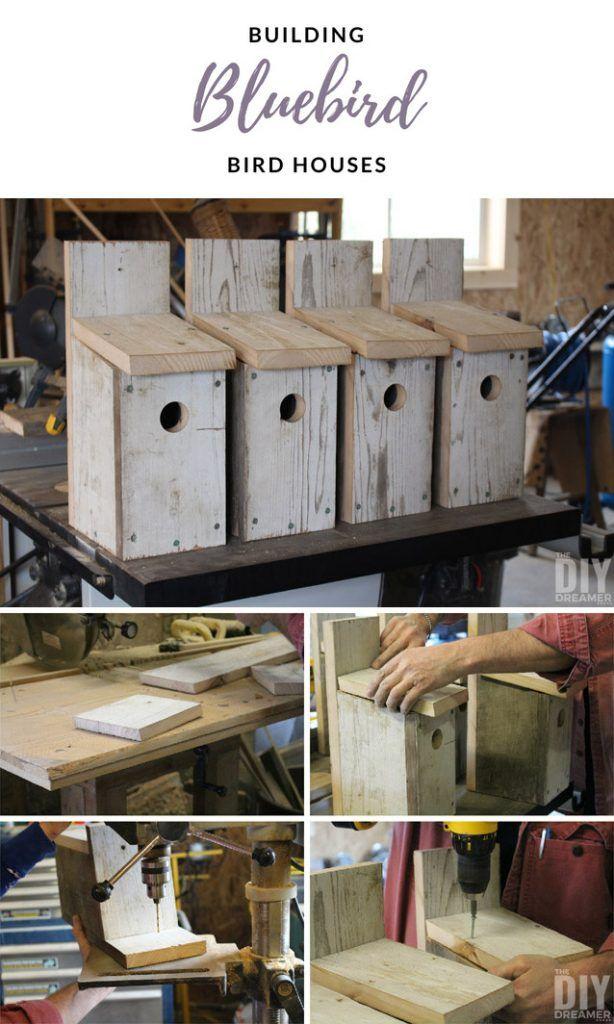Building Bluebird Bird Houses How to build a bird house
