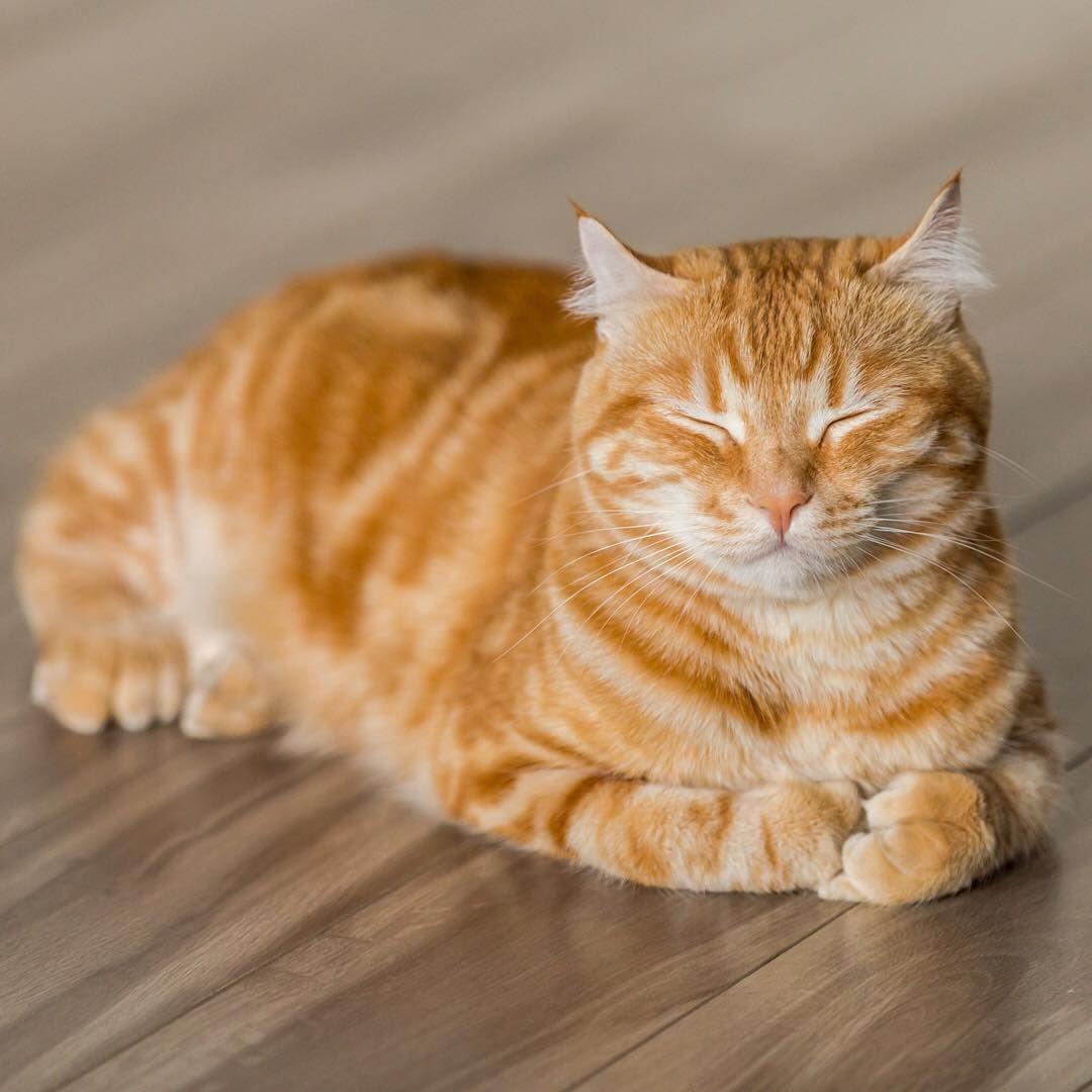 Beautiful Ginger Cat Ginger Cat Orange Cat Natural Light