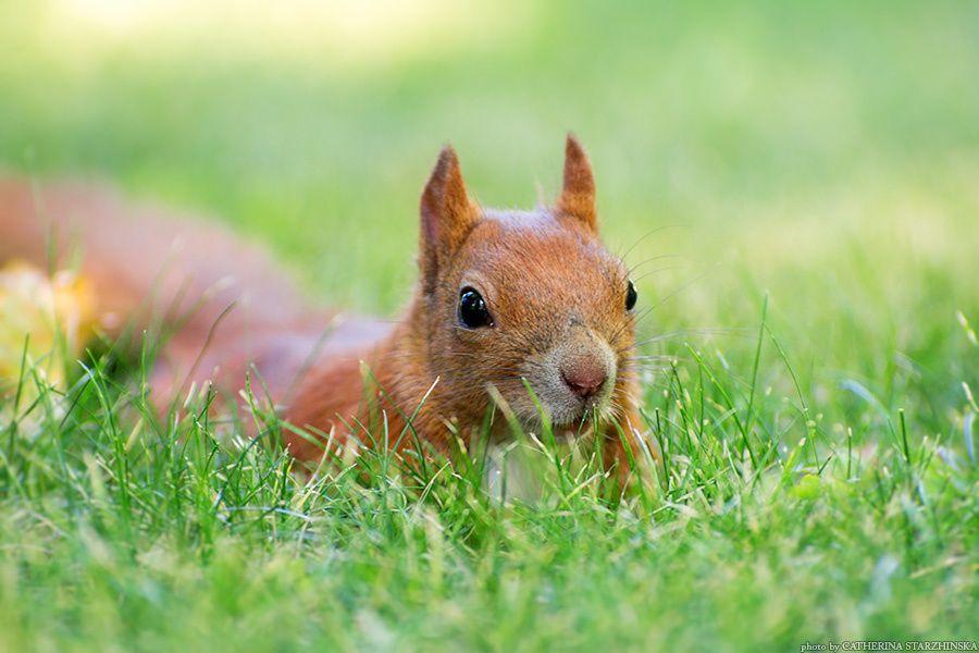 Squirrel by Catherina Starzhinska on 500px
