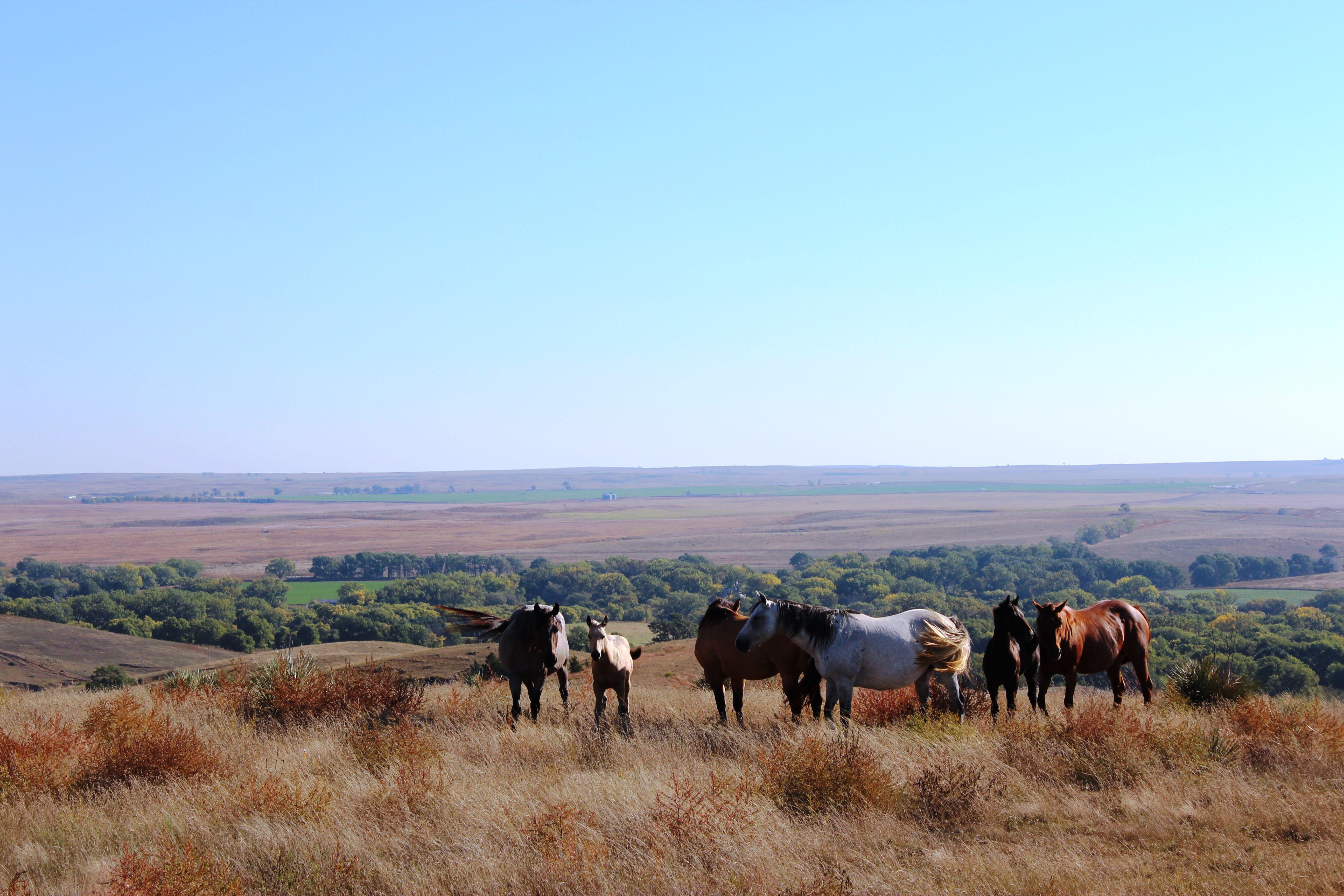 One Of The Most Beautiful Views In Nebraska North Of Camp Hayes Lake In Hayes County Nebraska Scenery Beautiful Views