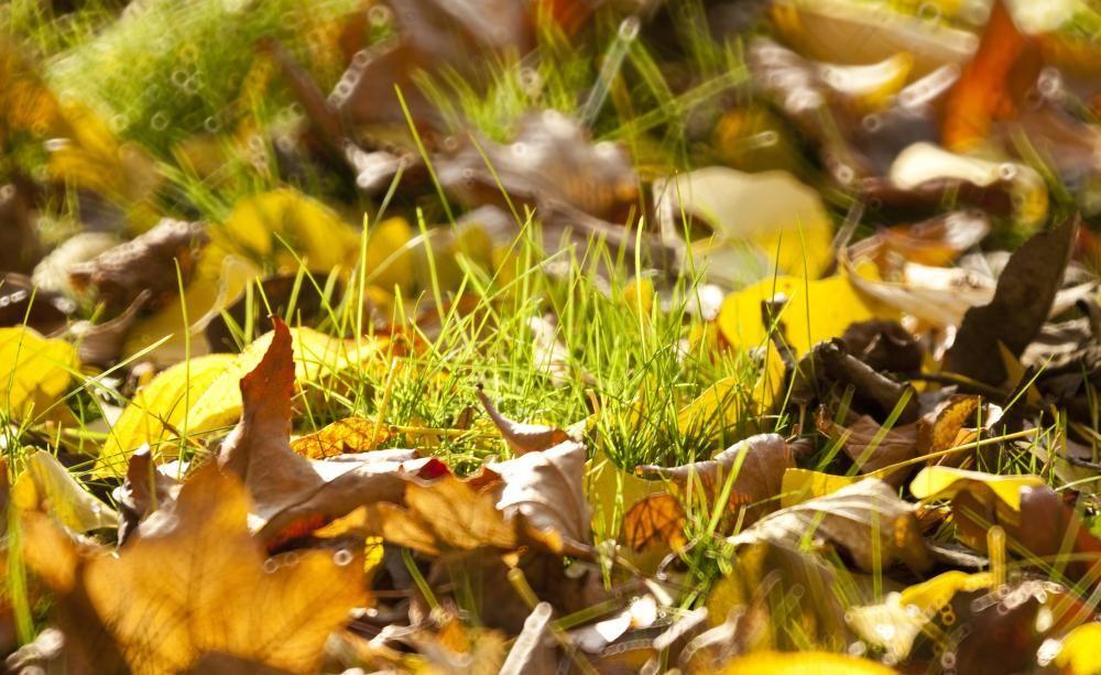 Rasenpflege: 5 Tipps Für Das Saisonende | Garten Und Winter Garten Im Herbst Tipps Ideen