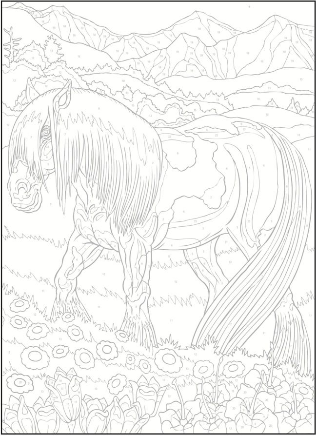 Creative Haven Horses Color by Number Coloring Book   Things to ...