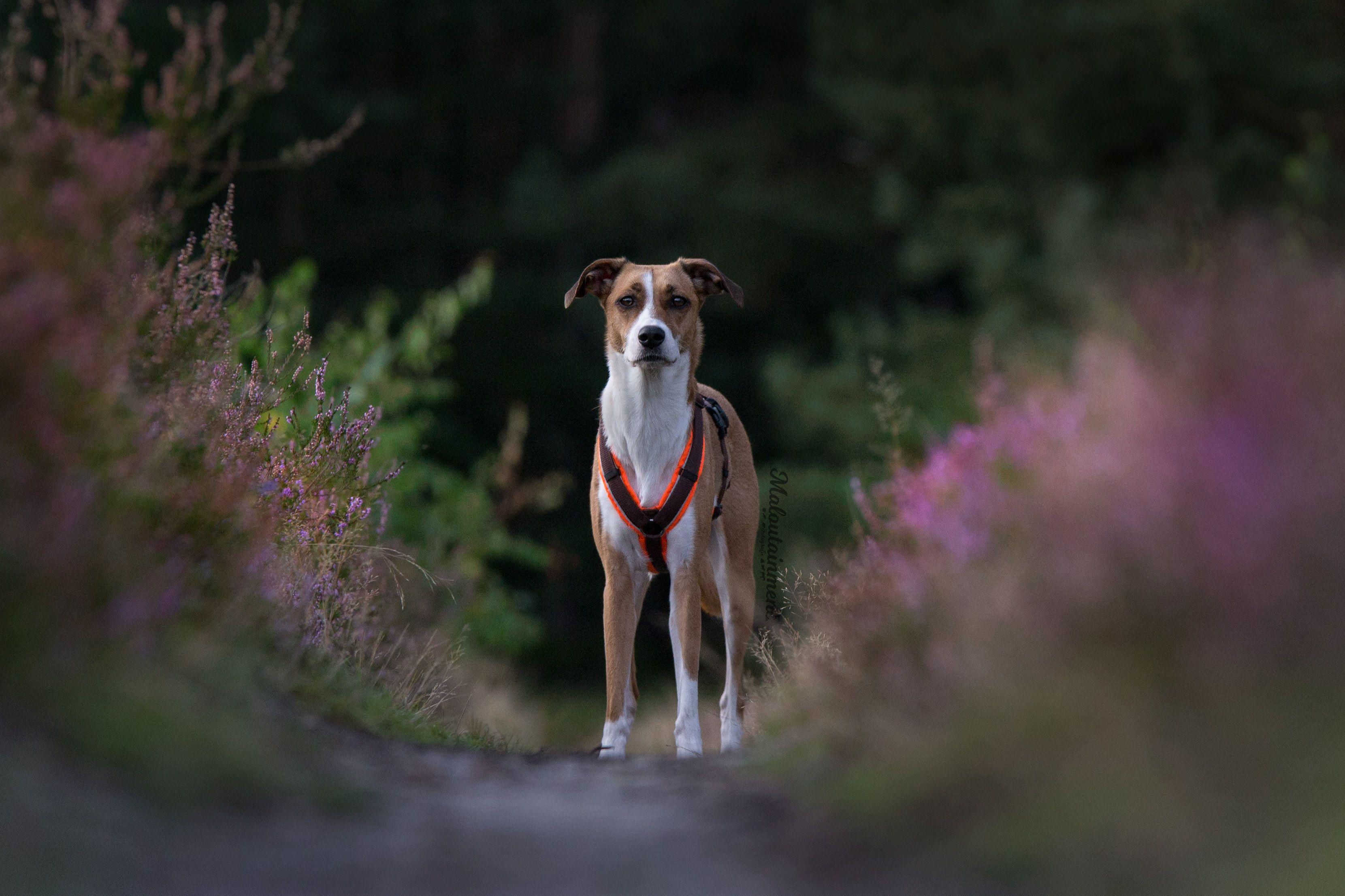 Ein Bild Aus Einem Meiner Shootings Maria Mal Bilder Hund Und Katze Und Hunde