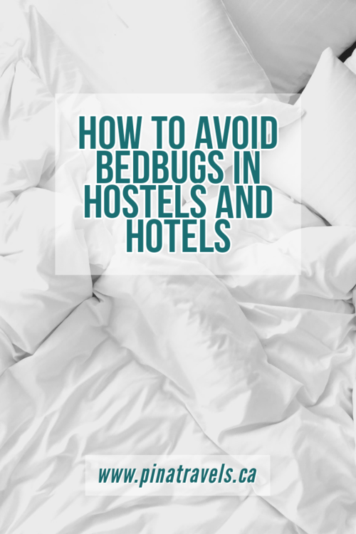 Jan 2 How to survive a hostel that has bedbugs in 2020