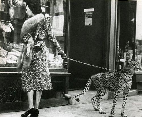 Walking The Cheetah. Global gallery, Cheetah