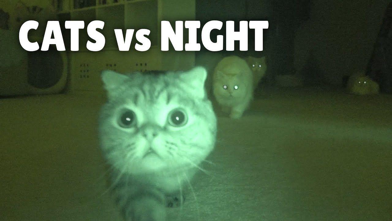 Cats Vs Night Youtube In 2020 Cats I Love Cats Domestic Cat
