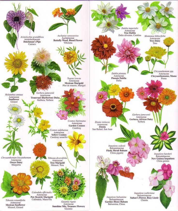Photos And Names Of Flowers Flower Chart Flower And