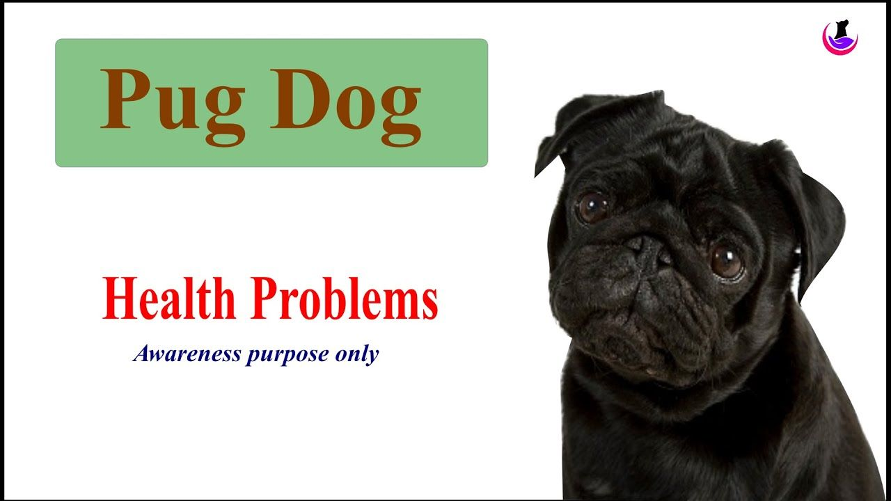 Pin By Dogs Pribome On Dog Health With Images Dog Health Problems Dog Health Health Problems