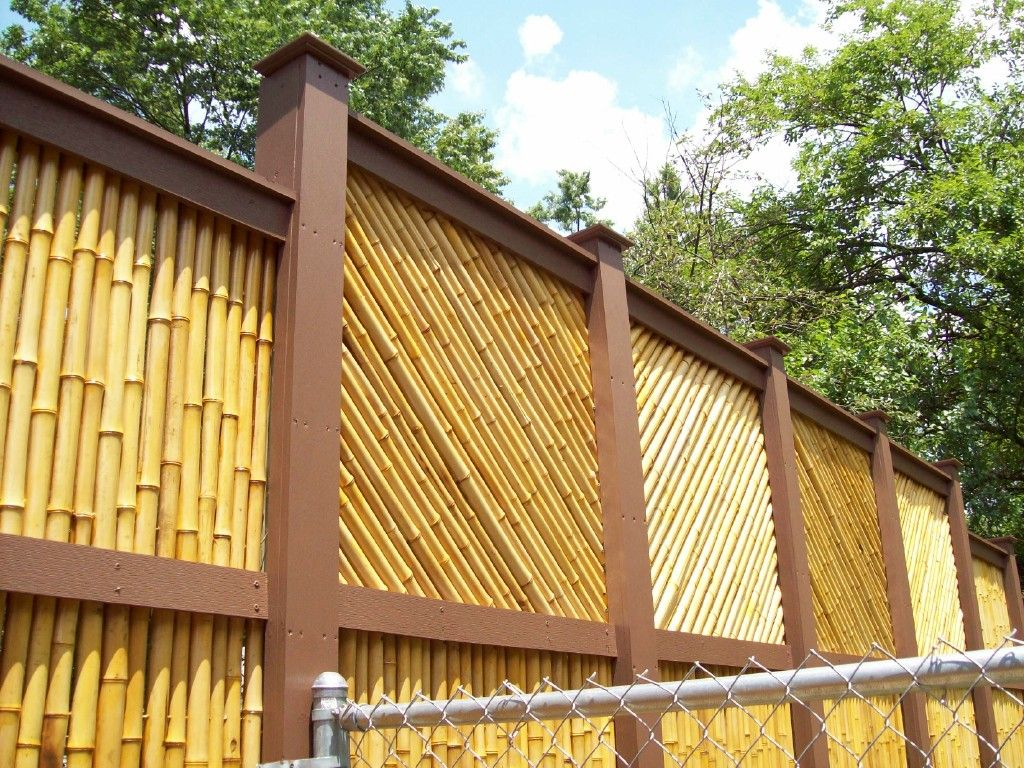 Like the bamboo yard pinterest fences bamboo privacy fence concept of the backyard bamboo fence workwithnaturefo
