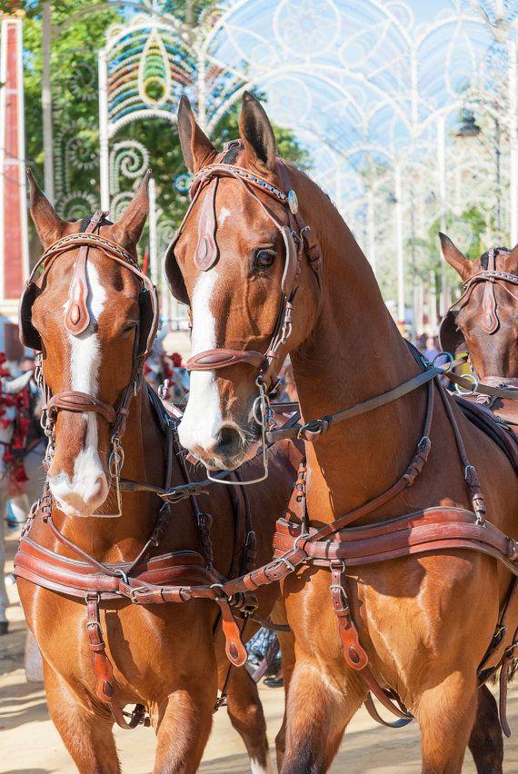 Jerez Horse Festival horses equine art by ANDREWLEVERGALLERY
