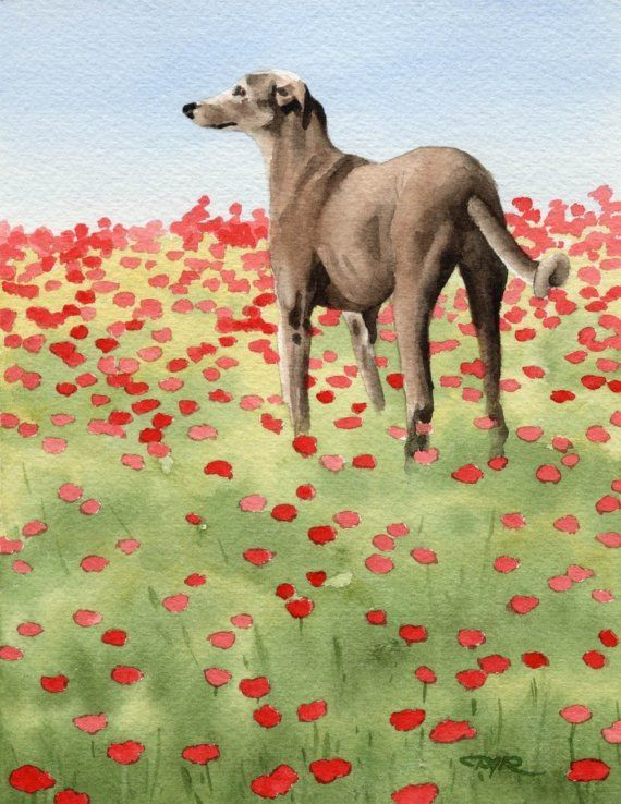 Greyhound Watercolor Painting Art Print by Artist DJ Rogers
