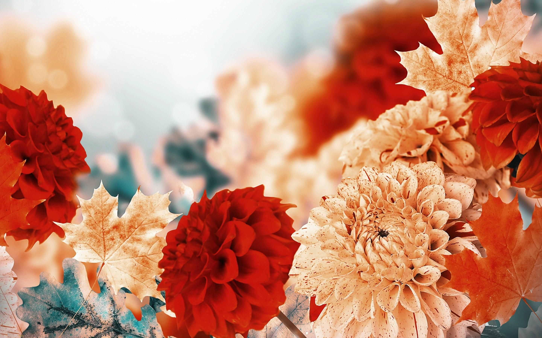 autumn flowers wallpaper - google zoeken | backgrounds | pinterest