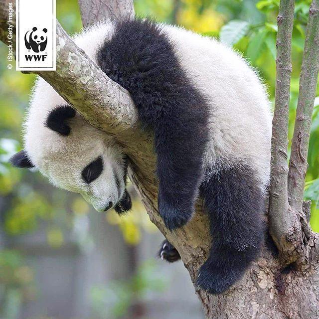 panda tipp zum feiertag ein gem tliches pl tzchen suchen und einfach mal abh ngen panda. Black Bedroom Furniture Sets. Home Design Ideas