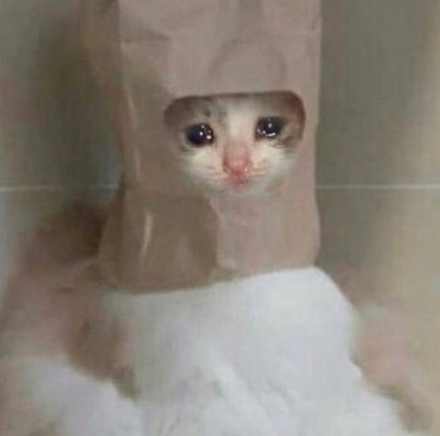 Pin On Sad Cat