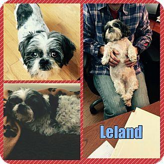 Pin By Diane Litter On Adopt Shih Tzu Pet Adoption Pets