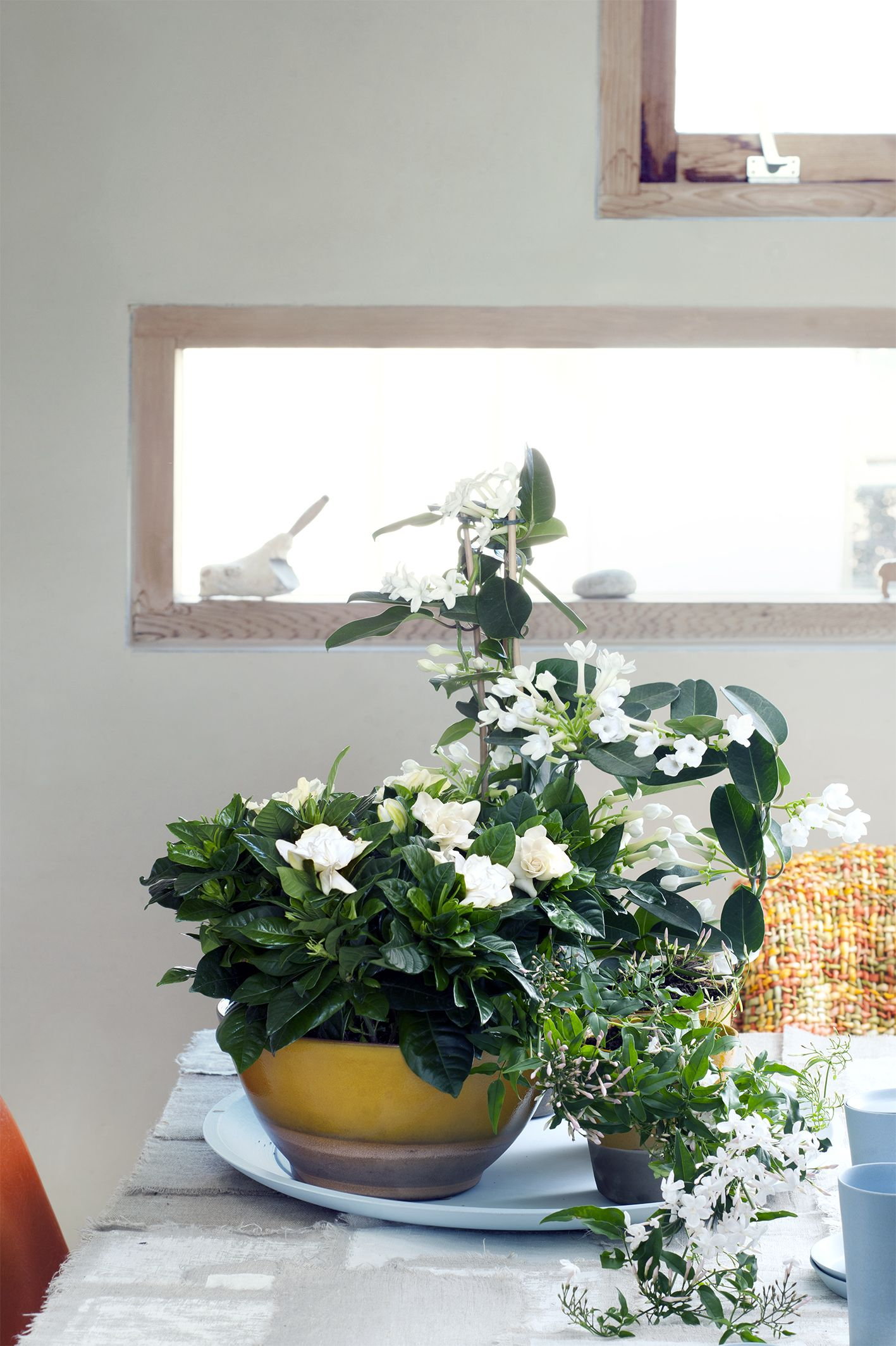 de bl hende zimmerpflanzen bl hende zimmerpflanzen. Black Bedroom Furniture Sets. Home Design Ideas