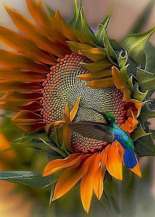 Sunflower and humming bird