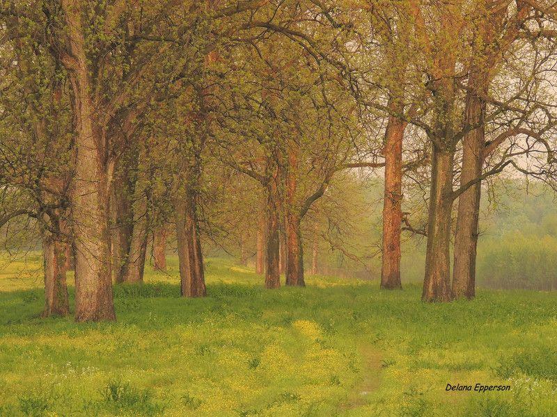 Enchanted Path.  Thursday April 24, 2014 Jacksonport, AR, by Delana Epperson