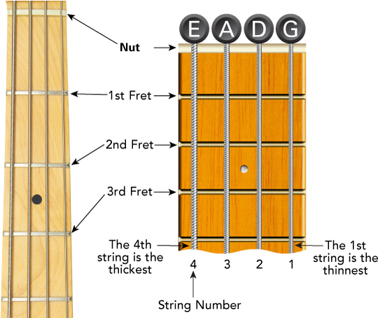 9 Easy Bass Lines for Beginners You Won't Find in a Book