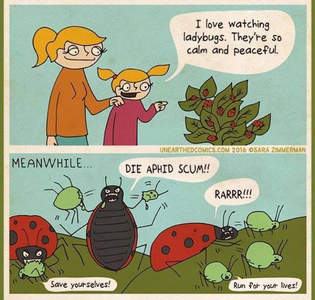 Pest Control Gardening Quotes Funny Gardening Humor Ladybug