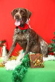 Pin By Dj Dogirl On Full 1 Christmas Critters Losing A Dog