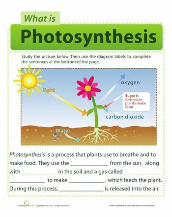 Photosynthesis for Kids | Photosynthesis, Worksheets and School