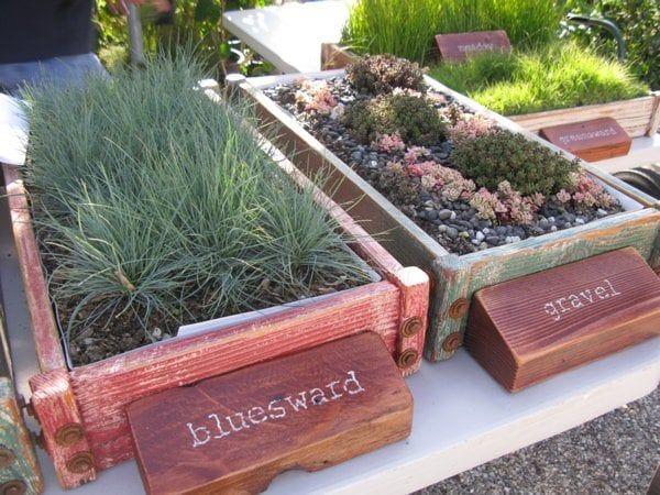 Photo Of Bellefontaine Nursery Pasadena Ca United States Bluesward And Gravel Gardens