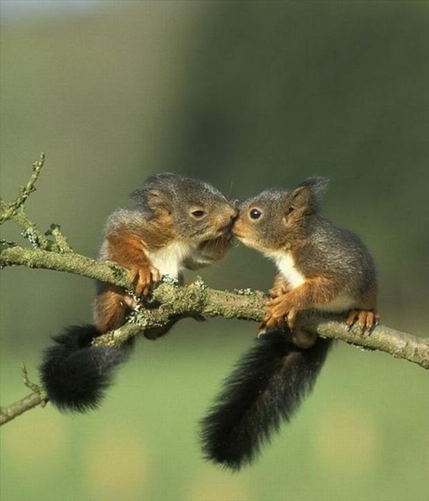 Image D Animaux Trop Mimi cute squirrels kissing | pin pals of sugarbush squirrel® | pinterest