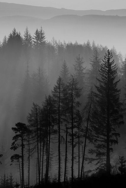 Image result for images somber tones dark winter landscape