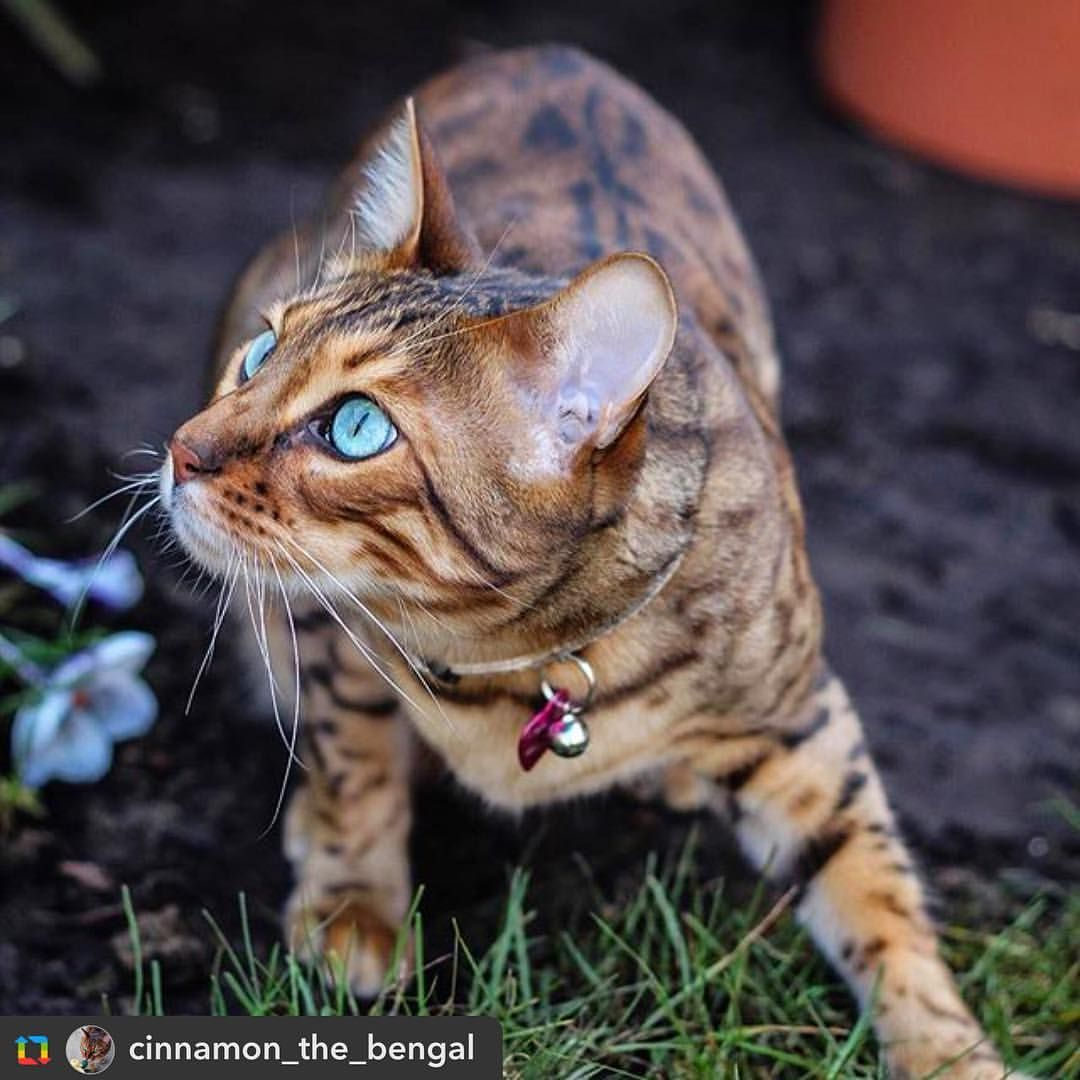 Shhh... bird spotted... . by cinnamon_the_bengal