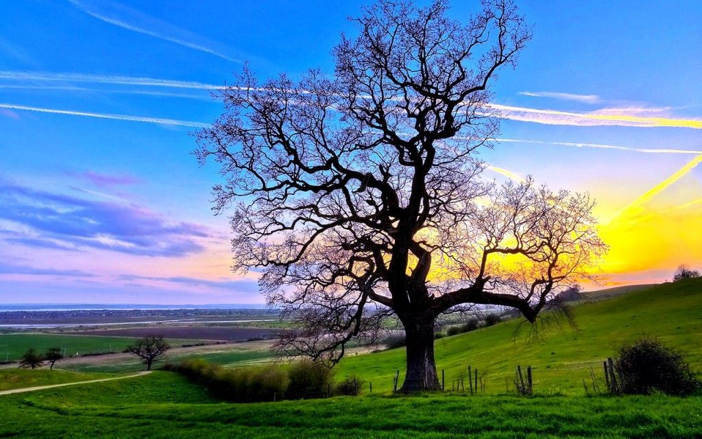Wallpaper for computer hd wallpaper for pc free download for Landscape trees