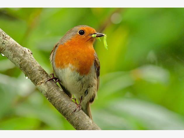 So Locken Sie Vogel In Ihren Garten Vogel Im Garten Garten Selbstversorger Garten
