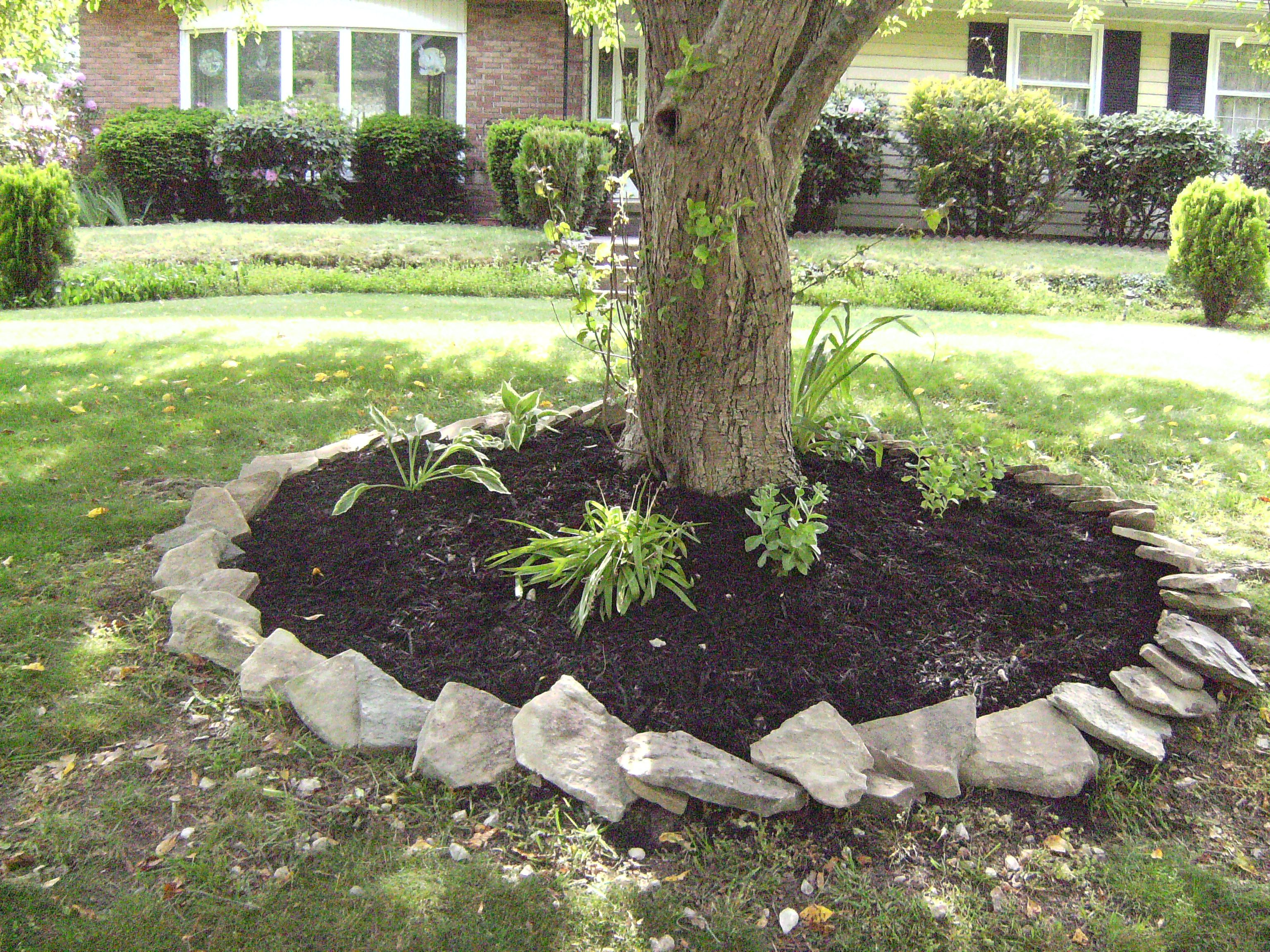 Around magnolia tree mulch and hosta decorating for Tree landscaping ideas