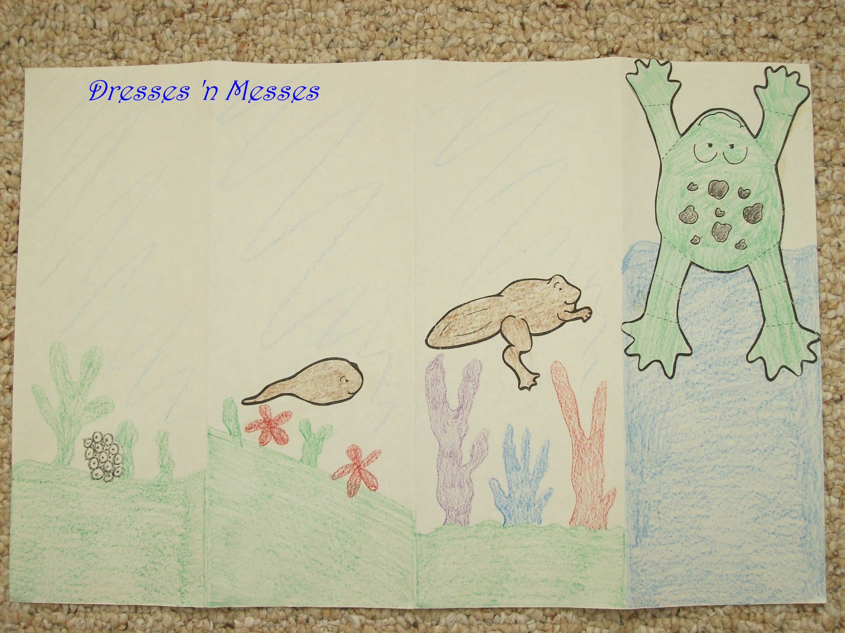Frog Book And Lifecycle Activity