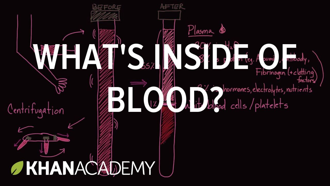 What's Inside of Blood? | Nurse me back to health | Human anatomy