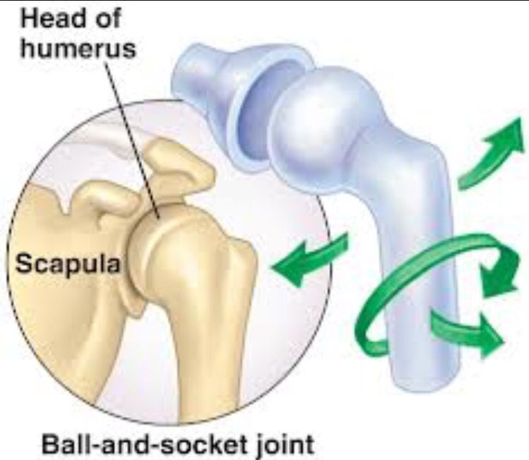 ball and socket joint : one type of synovial joint. multiaxial . a, Human Body